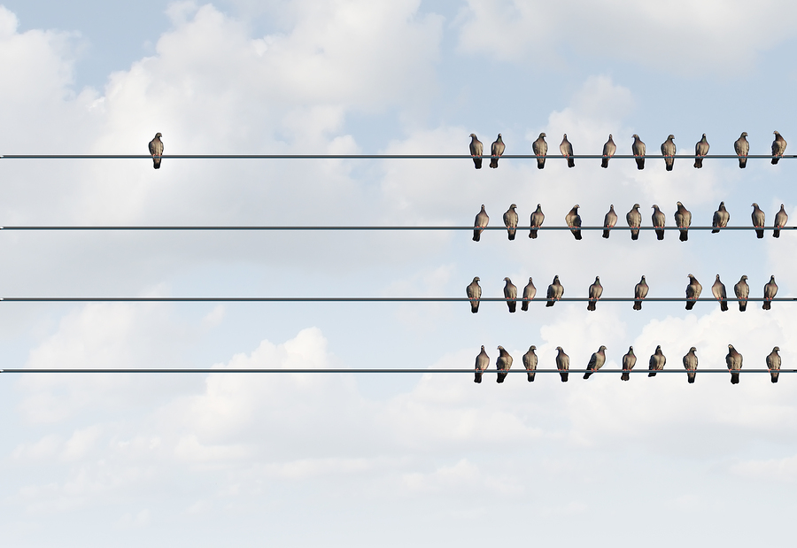Birds on a wire - Liberating Leadership in action