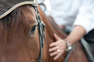 Through the eyes of a horse